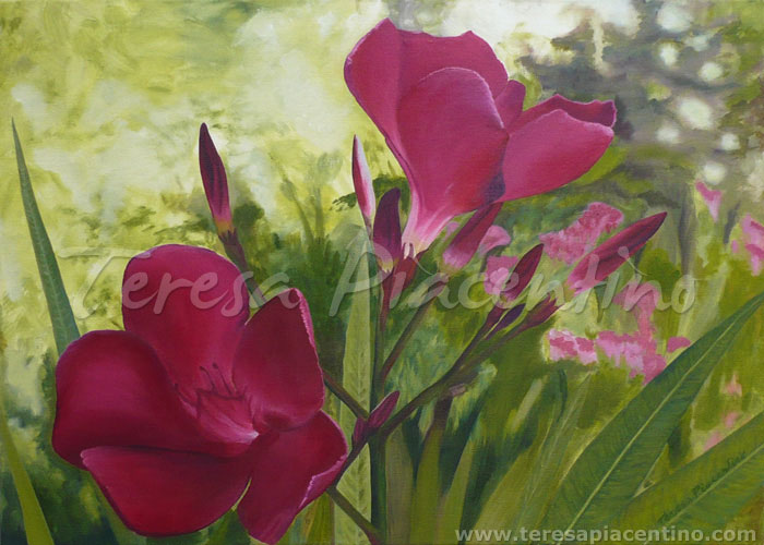 cuadros de flores al oleo